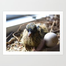 new born dove Art Print