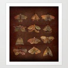 Moth Collector Art Print