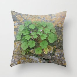 Life on a stone wall Throw Pillow