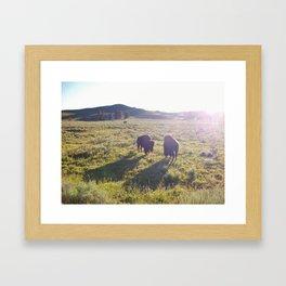Wild Buffalo Framed Art Print
