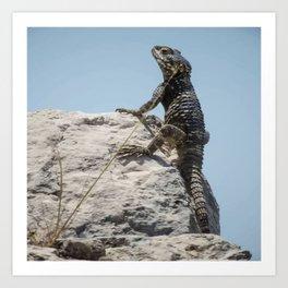 Lizard Sunbathing On A Rock Vector Art Print