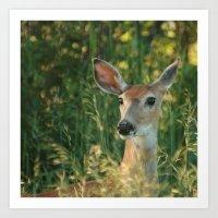 Curious Mule Deer Art Print