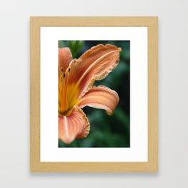 Bright Orange Flower Framed Art Print