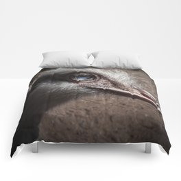 The Ostrich Comforters