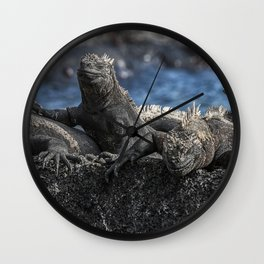 Iguanas relaxing sunbathing on rock at beach Wall Clock
