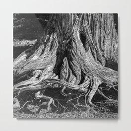 Lovecraft Roots Metal Print