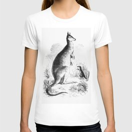 Lord Derbys scaly-tailed squirrel from Voyages et Aventures Dans lAfrique equatoriale (1863) T-shirt