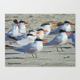 Elegant Terns Canvas Print