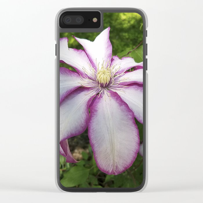 Clematis 'Betty Risdon'- Stunning two-tone flowers Clear iPhone Case