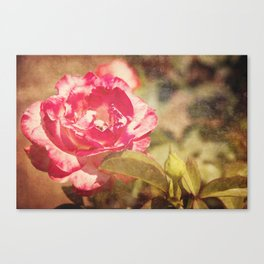 Cliche: A Rose by any other Name Canvas Print