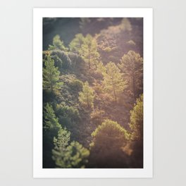 Pines in the mountains Art Print
