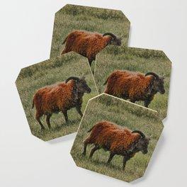 Soay Sheep Coaster