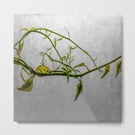 Magic Vine Metal Print
