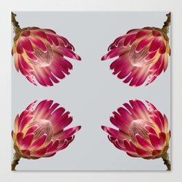 Tulip_Sugerbush_Pink Protea Canvas Print