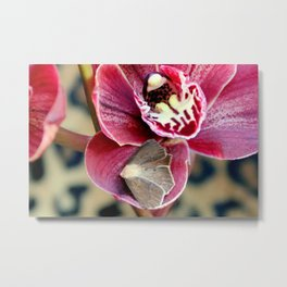 Oddly, Not A Moth Orchid Metal Print