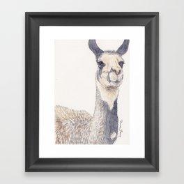 Curious Llama Framed Art Print