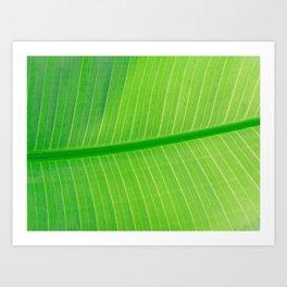 Close Up Of Green Banana Leaf Lime Green Tropical Leaf Art Print