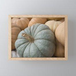 Blue Pumpkin and Squash Close up Framed Mini Art Print