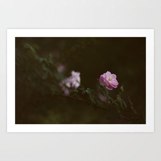 Rose #1 Art Print