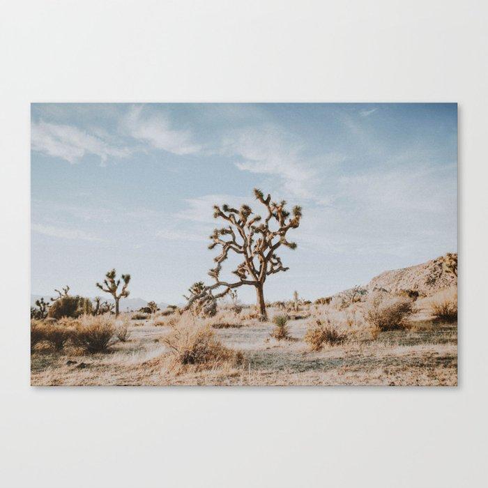 Joshua Tree II / California Desert Leinwanddruck