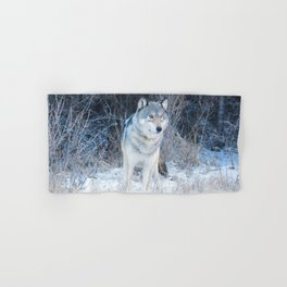 Grey Wolf in the Canadian Rocky Mountains Hand & Bath Towel