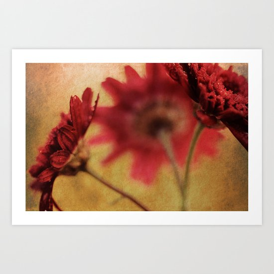 Breaking the Rules - Textured Vintage Red Daisy Macro Art Print