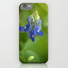 Bluebonnet ~ State Flower of Texas iPhone 6s Slim Case