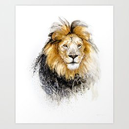 African Lion Male Art Print