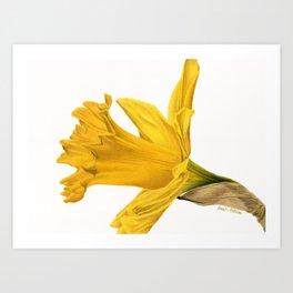 Herald Of Spring Art Print