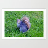 Squirrel 2 Art Print