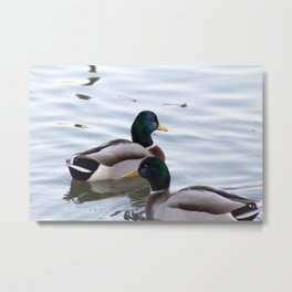 A Mallard Couple Metal Print