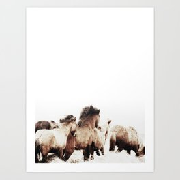 WILD AND FREE 2 - HORSES OF ICELAND Art Print