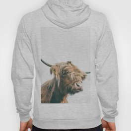 Majestic Highland cow portrait Hoody