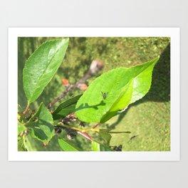 Buggy on a pear tree Art Print