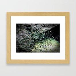 Shimmering Shoal Framed Art Print