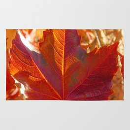maple leaf. Autumn in Zamora. Spain Rug