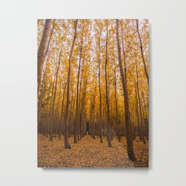Forest Landscape Photography Metal Print