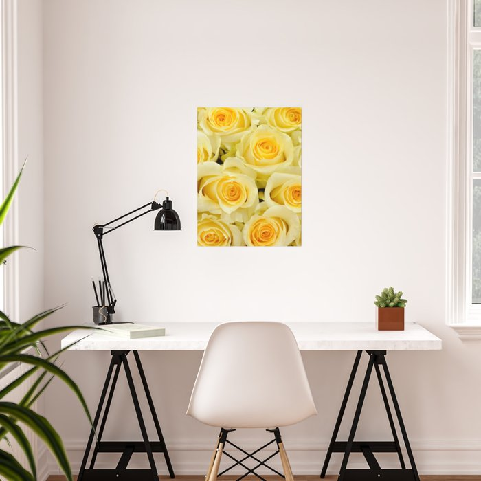 soft yellow roses close up Poster