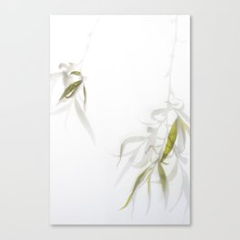 Veiled Willow Canvas Print