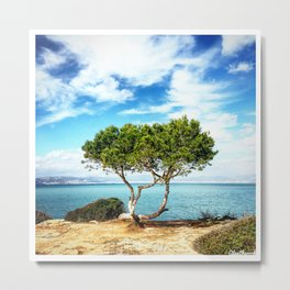 Tree in Focus Metal Print