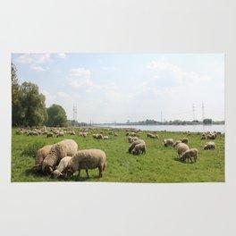 Grazing Sheep by the Rhine Rug
