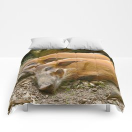 Red River Hogs taking a nap Comforters