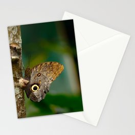 Butterfly eye of owl (Caligo eurilochus) Stationery Cards