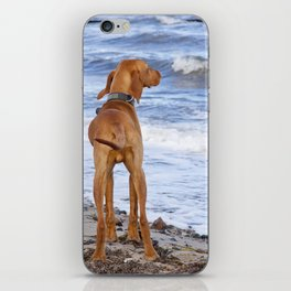 Vizsla iPhone Skin