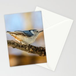 White breasted Nuthatch Stationery Cards