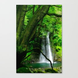 Waterfall in Azores islands Canvas Print