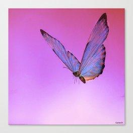 Papillon de nuit 2 Canvas Print