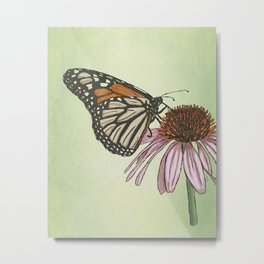 Butterfly and Coneflower Metal Print