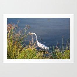 Crane (Bob) Art Print