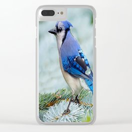 Blue Jay  in Winter Pine Tree Clear iPhone Case